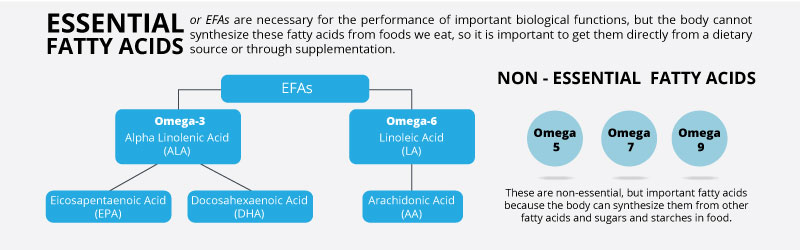 Essential-Fatty-Acids-Banner.jpg